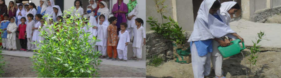 Plantation at schools